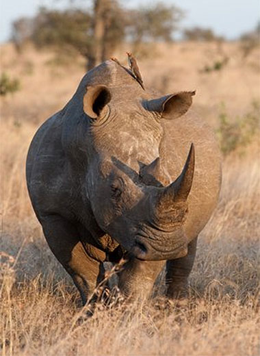 Rhino Hunting in Africa with Tinashe