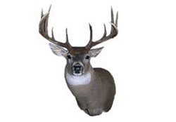 Select Taxidermy offers a full line of supplies, a taxidermy school, full taxidermy services for the discriminatory client, as well as a consulting service to some of the best hunting destinations around the world!