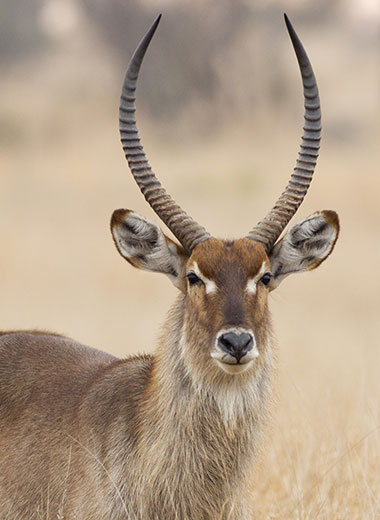 Waterbuck Hunting in Africa with Tinashe