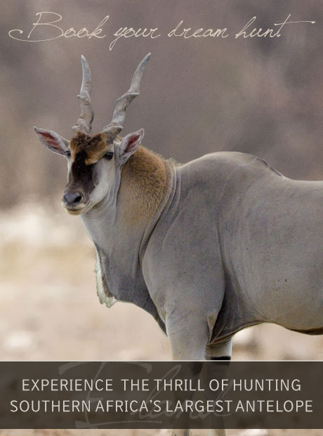 Book Your Eland Hunt with Tinashe